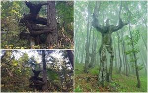 18 hình ảnh khiến bạn phải giật mình khi nhìn vào những cây cổ thụ