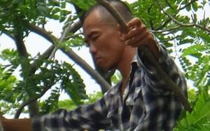 Hàng chục cảnh sát cứu hộ kẻ nghi ngáo đá ngồi trên ngọn cây cao 15m