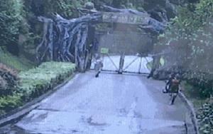 Trèo tường trốn vé vào sở thú, du khách suýt bị hổ tấn công