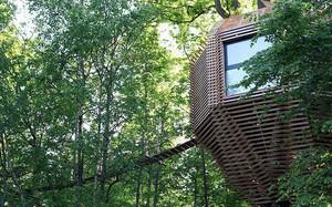 Độc đáo ngôi nhà gỗ trên cây sồi trăm tuổi