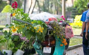 """Tiểu thương đập bỏ hoa phản đối thói """"xin hoa giờ cuối"""", nhiều người Sài Gòn vẫn đến tranh thủ """"lượm"""" hoa về"""