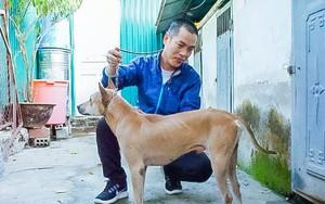 Người 30 năm nuôi chó Phú Quốc: 'Tôi từng khóc, đóng cửa giao dịch 7 ngày để tưởng nhớ con thủ lĩnh'
