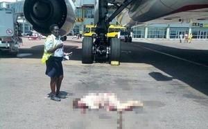 Rơi từ cửa thoát hiểm máy bay xuống đất, nữ tiếp viên hàng không nguy kịch
