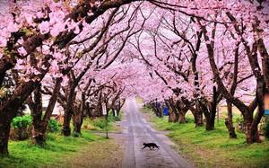 """Ai đi Nhật năm 2019 chắc chắn phải biết quy định về thuế """"tạm biệt"""" sắp được áp dụng này"""