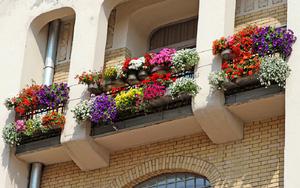 """""""Ngất lịm"""" với những ban công rực rỡ sắc hoa trong sắc hè"""
