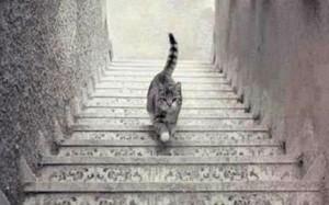 Xác định hướng đi của con mèo sẽ tiết lộ bạn giải quyết vấn đề theo bộ não hay con tim