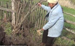 Xới đất trồng khoai tây, người đàn ông kinh hãi phát hiện đầu lâu, vội vàng báo cho vợ thì nhận được câu trả lời khiến ông thêm lạnh gáy