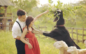 """Đang chụp ảnh cưới ở thảo nguyên hoa, cô dâu Hà Nội sững người vì dê xồm xông vào """"sàm sỡ"""""""