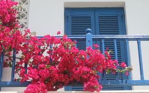 """12 loại hoa nếu trồng ở ban công sẽ khiến hàng xóm """"lác mắt"""""""