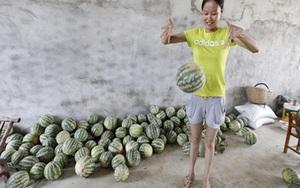 Dưa hấu Trung Quốc nảy tưng tưng như bóng bông
