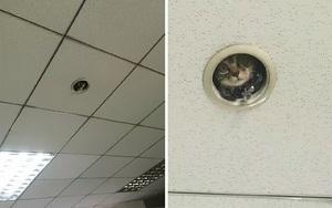 Dân văn phòng cảnh giác này, biết đâu bạn đang bị giám sát bằng... mèo đấy!