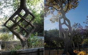 Những cái cây với hình dáng kỳ lạ không thể hiểu nổi