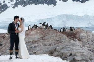 Cặp đôi đến Nam Cực làm đám cưới cùng chim cánh cụt