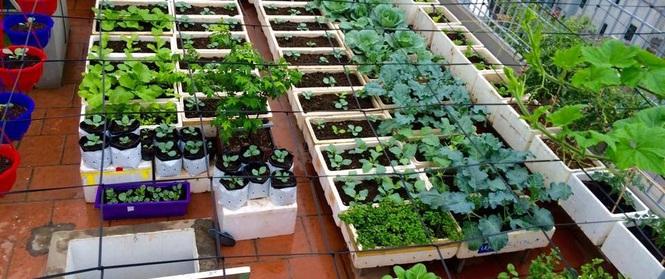 Đầu tư 30 triệu, ông bố 2 con sở hữu vườn rau trên sân thượng tươi đẹp bất ngờ giữa lòng thủ đô