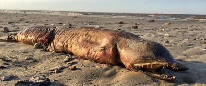 """Phát hiện """"quái vật"""" không có mắt, răng nhọn tua tủa trôi dạt vào bờ biển sau siêu bão"""