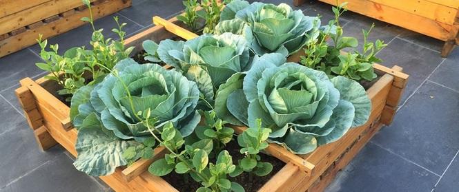 Trồng rau trong khung gỗ - giải pháp vừa có rau sạch để ăn lại vừa có khu vườn đẹp