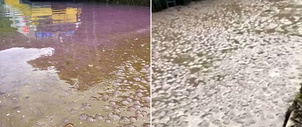 Thấy nước biển đột ngột chuyển màu tím tuyệt đẹp, người dân đến gần và phát hiện sự thật đáng sợ
