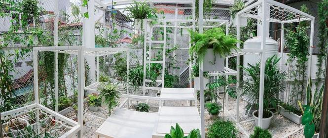 """Khu vườn """"điều hòa"""" không sợ nắng mùa hè của chủ nhân 9x ở Thái Thịnh, Hà Nội"""