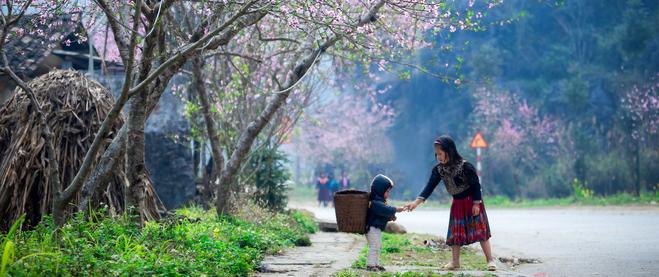 Đào rừng bung nở, gọi mùa xuân đẹp lịm tim trong những bản làng Hà Giang