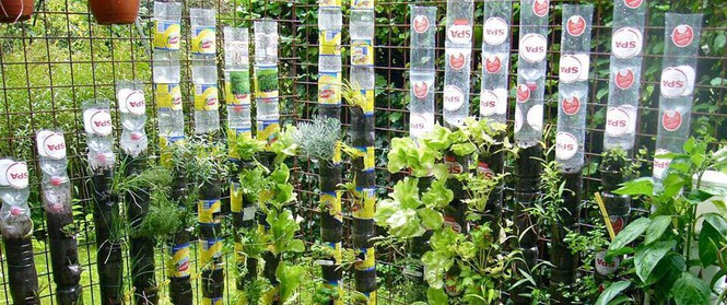 Câu chuyện trồng rau sạch từ chai và thùng nhựa bỏ đi của vị giáo sư Đại học sau khi về hưu