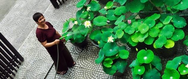 Những đóa sen nở duyên dáng, đẹp bình yên trước sân nhà của người phụ nữ Hà Thành