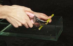 Cách cắm bình hoa đơn sắc giản dị mà tinh tế 1