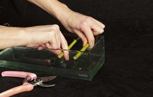 Cách cắm bình hoa đơn sắc giản dị mà tinh tế 2