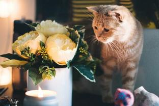 Hoa này ăn được không nhỉ?