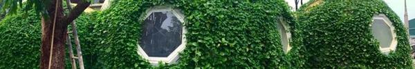 Ngôi nhà hình tròn phủ đầy cây xanh siêu độc đáo ông bố trẻ làm tặng con trai ở Hà Nội