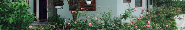 Ngôi nhà bé xinh, bình yên bên vườn hồng rực rỡ cách Hà Nội hơn 1 giờ đi ô tô
