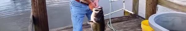 Thả con cá nhỏ xuống hồ, người đàn ông bắt được thứ khiến ngàn người ngạc nhiên