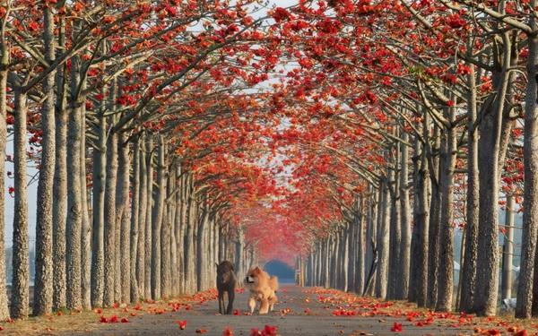 """Những con đường hoa đẹp như """"chốn thần tiên"""""""