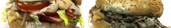 Nếu bạn thắc mắc quá trình đồ ăn bị mốc như thế nào thì đây là câu trả lời
