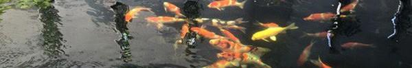Những hồ nuôi cá cảnh đẹp mê ly trong nhà sao Việt