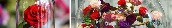 """Chiêm ngưỡng những """"bông hồng vĩnh cửu"""" đặt trong lồng kính y như truyện cổ tích"""