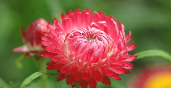 Nếu chưa biết hoa nở như thế nào thì những bức ảnh này sẽ cho bạn câu trả lời