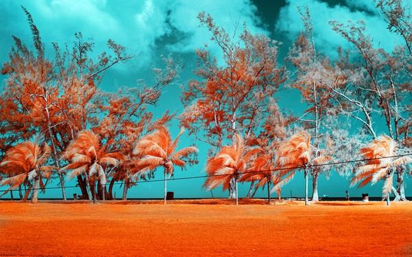 Nếu thế giới chỉ có 2 màu thì cảnh vật vẫn đẹp lung linh khiến bạn ngẩn ngơ