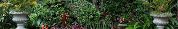 Biến sân vườn thành ốc đảo xanh mát trong lành nhờ vài mẹo nhỏ