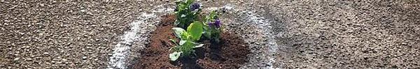 Sự thật bất ngờ phía sau hình ảnh hàng chục khóm hoa mọc lên giữa đường bê tông