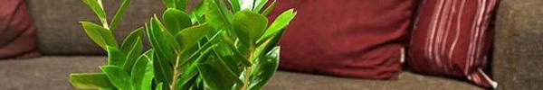 5 loại cây cảnh vẫn sống tốt dù cho nhà thiếu sáng trầm trọng