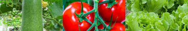 Thuộc lòng lịch trồng rau trong năm, trồng đâu thắng đó, rau sạch ê hề ăn cả năm không hết