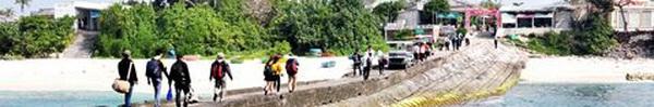 Rêu dệt thảm trầm tích núi lửa ở đảo Lý Sơn - Địa điểm du lịch