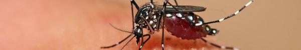 Đừng coi thường dịch bệnh sốt xuất huyết, đã có đến 14 trường hợp tử vong
