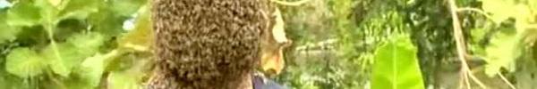 Kinh dị người đàn ông để 60.000 con ong bu kín mặt vẫn bình thản đọc sách