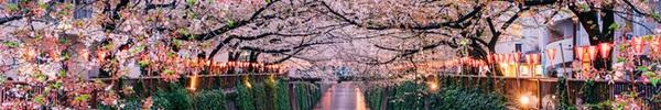Những khoảnh khắc đẹp mê mẩn của mùa xuân trên khắp thế giới