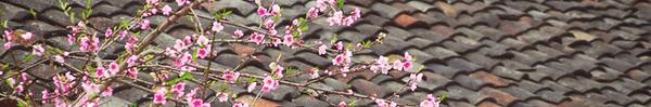 Ngẩn ngơ ngắm sắc trắng, sắc hồng của hoa mận, hoa đào ở Hà Giang