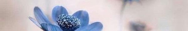 Chiêm tinh tiết lộ cuộc sống 12 cung Hoàng đạo trong tuần mới