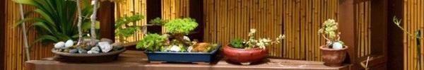 Học người Nhật cách trang trí vườn cực đẹp với cây bonsai