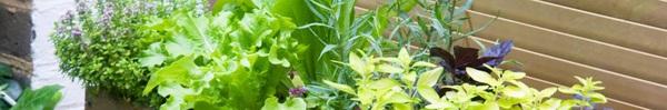 3 thiết kế chậu trồng cây gia vị đẹp và tiện cho nhà nhỏ