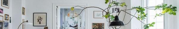 Cách trồng cây trong nhà để thu hút mọi ánh nhìn khi khách ghé thăm